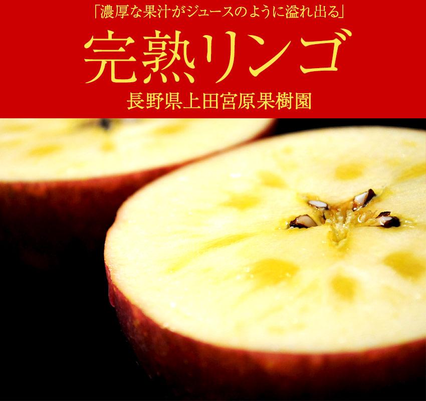 長野県上田宮原果樹園「完熟リンゴ」