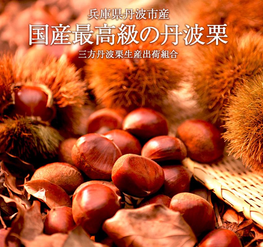 兵庫県丹波市産・三方丹波栗生産出荷組合「国産最高級の丹波栗」
