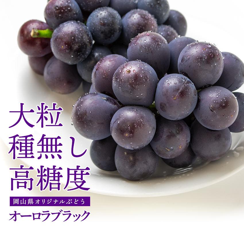 岡山県オリジナルぶどう 大粒・種無し・高糖度「オーロラブラック」
